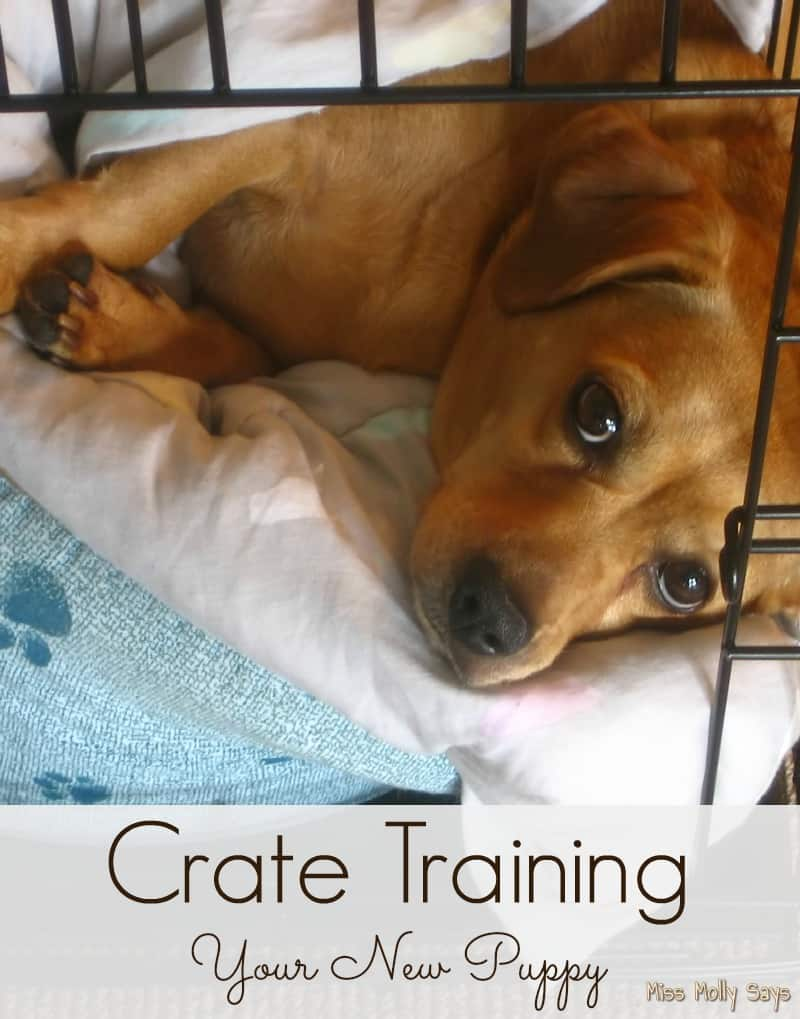 Crate Training Your New Puppy