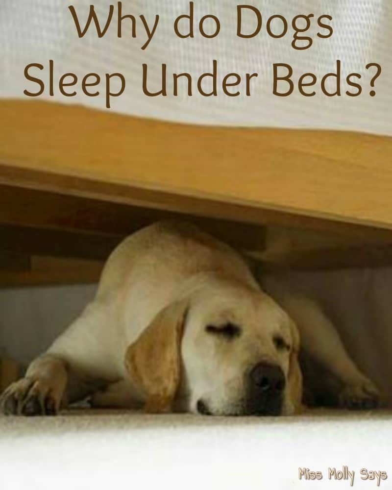 Why do Dogs Sleep Under Beds
