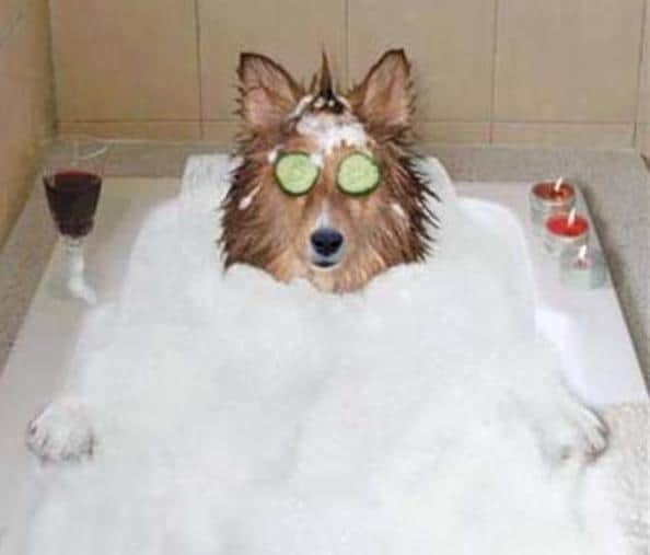 Dog-Bath-How-Tos-and-Not-Tos!