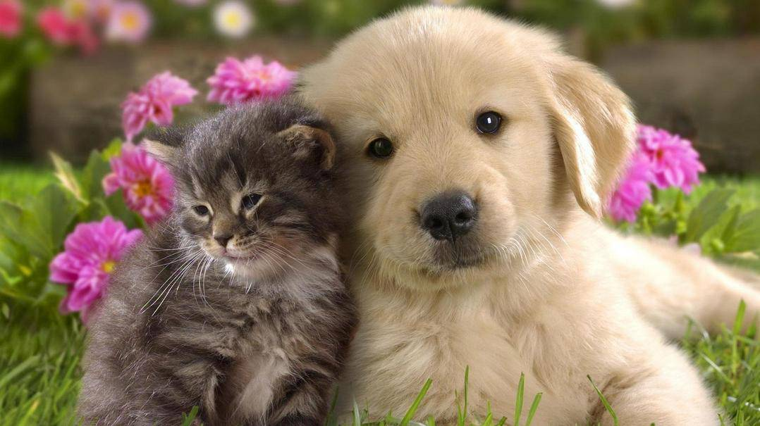 puppy and kitten, spay or neuter