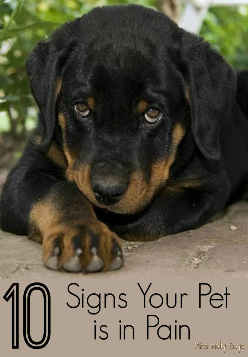 10 Signs Your Pet is in Pain
