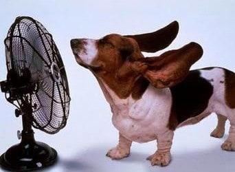 7 Warning Signs of Heatstroke in Dogs
