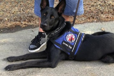 Operation Freedom Paws and PetArmour