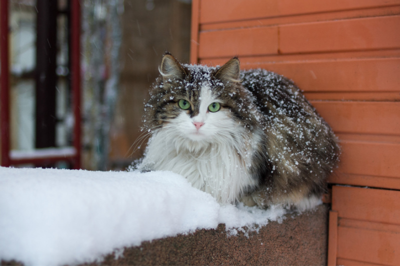 Cat with green eyes sitting on a ledge in the snow