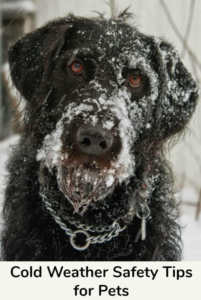 Cold Weather Safety Tips for Pets