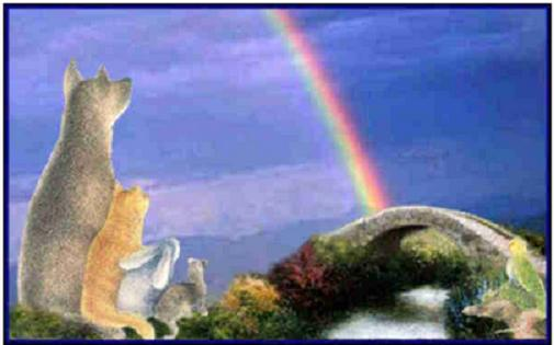 rainbow bridge, rainbow bridge poem