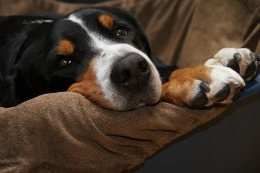 Common Nutrition Problems in Dogs