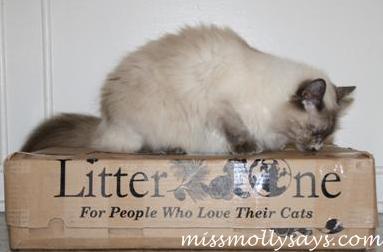 Litter One
