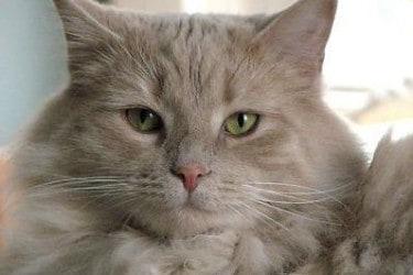 Cat Breeds | My Furry Feline Friends