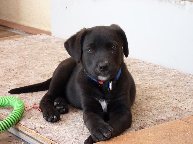 5 Tips to Discipline Your Puppy