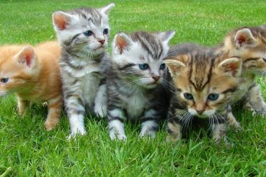 Cats and Kittens, Adopting a Healthy Cat