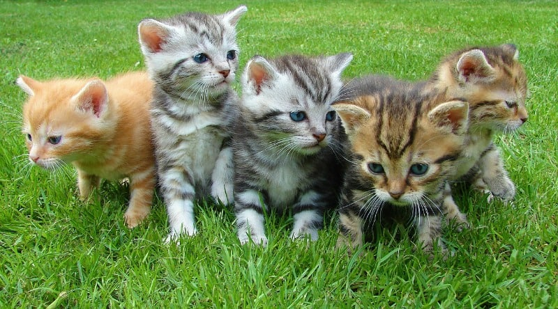 Cats and Kittens | Adopting a Healthy Cat