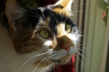 Common Health Problems in Cats