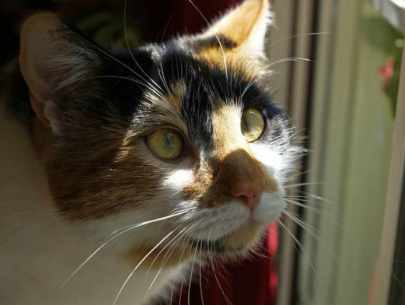 Common-Health-Problems-in-Cats