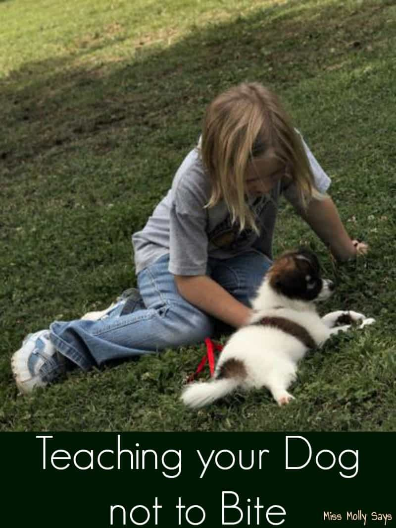 Teaching your Dog not to Bite