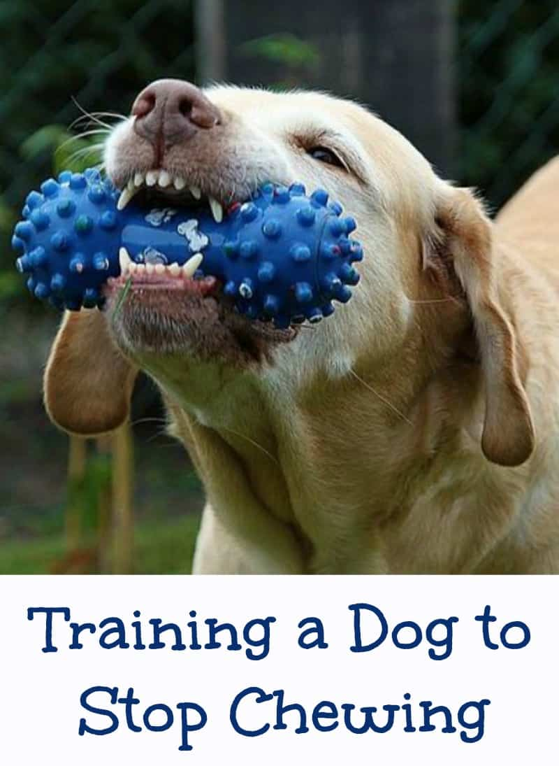 Training a Dog to Stop Chewing