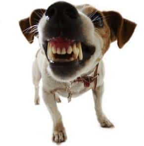 Stopping Food Aggression in Dogs