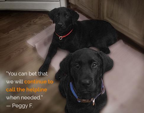 AKC GoodDog! HelplineSM