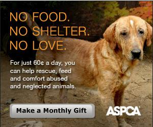 Ever wondered how you can help neglected animals?