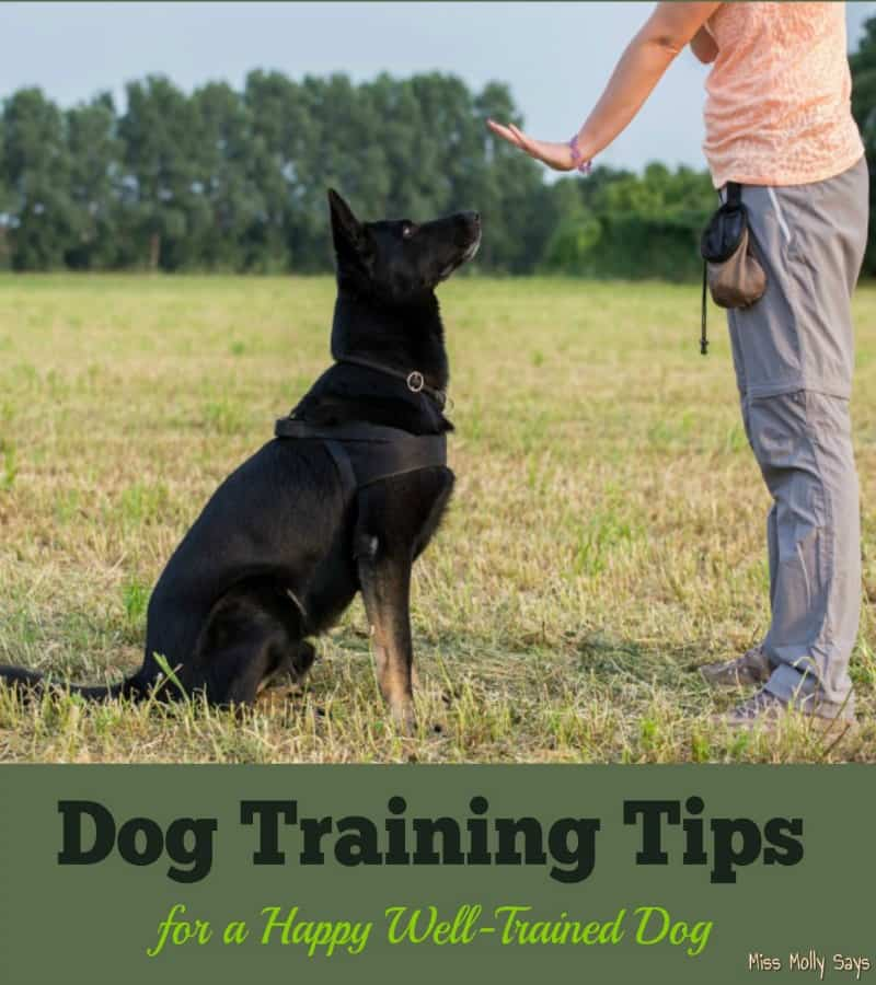 Dog Training Tips for a Happy Well-Trained Dog