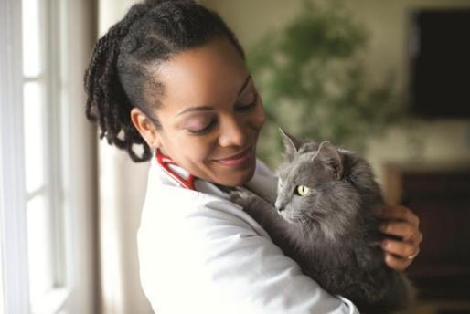 Best Diet for Senior Cats #HillsPet