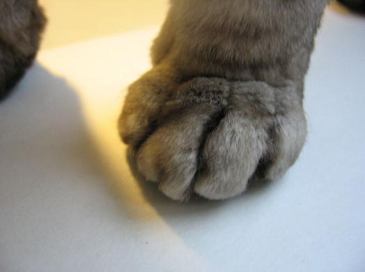 Cruelty of Claw Removal for Cats