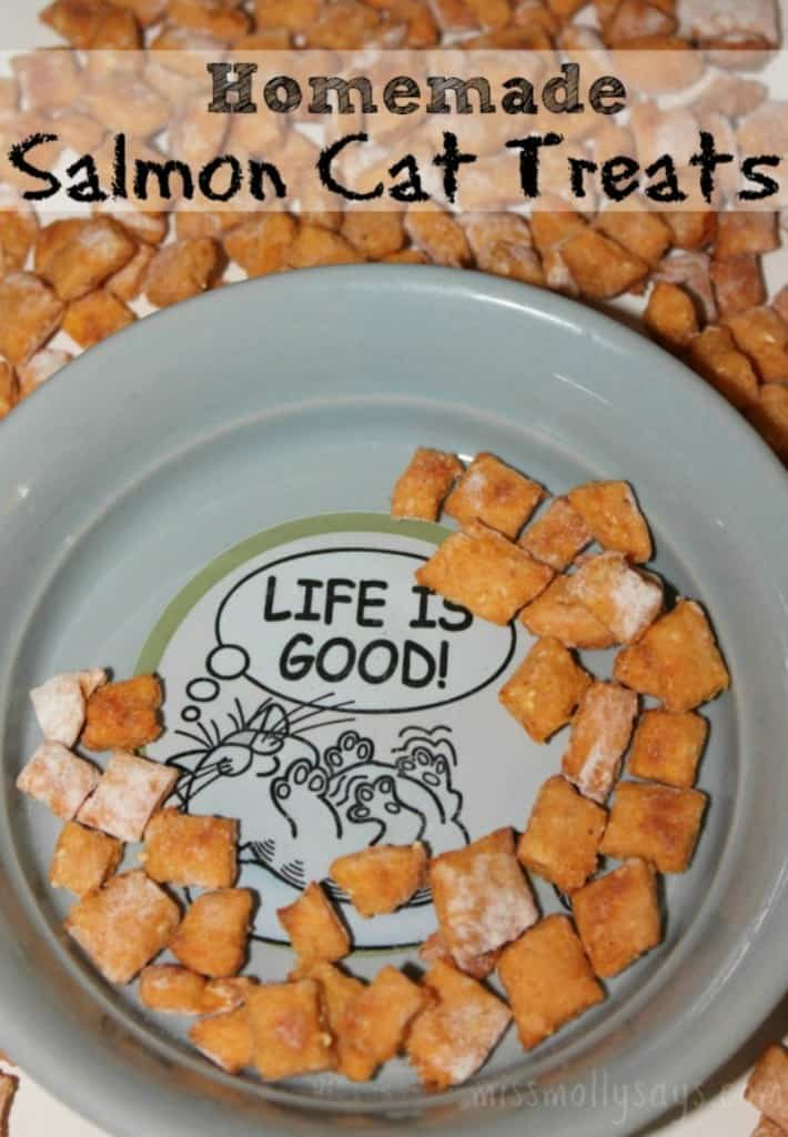 Homemade Salmon Cat Treats