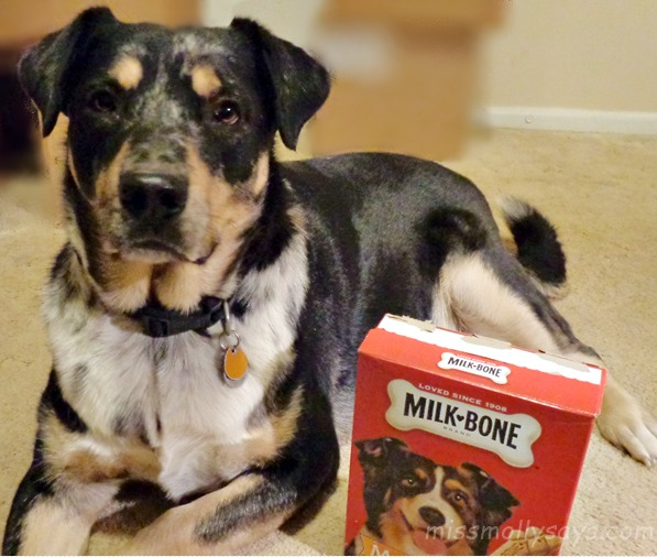Furever Puppy Love #SayitwithMilkBone, dog biscuits