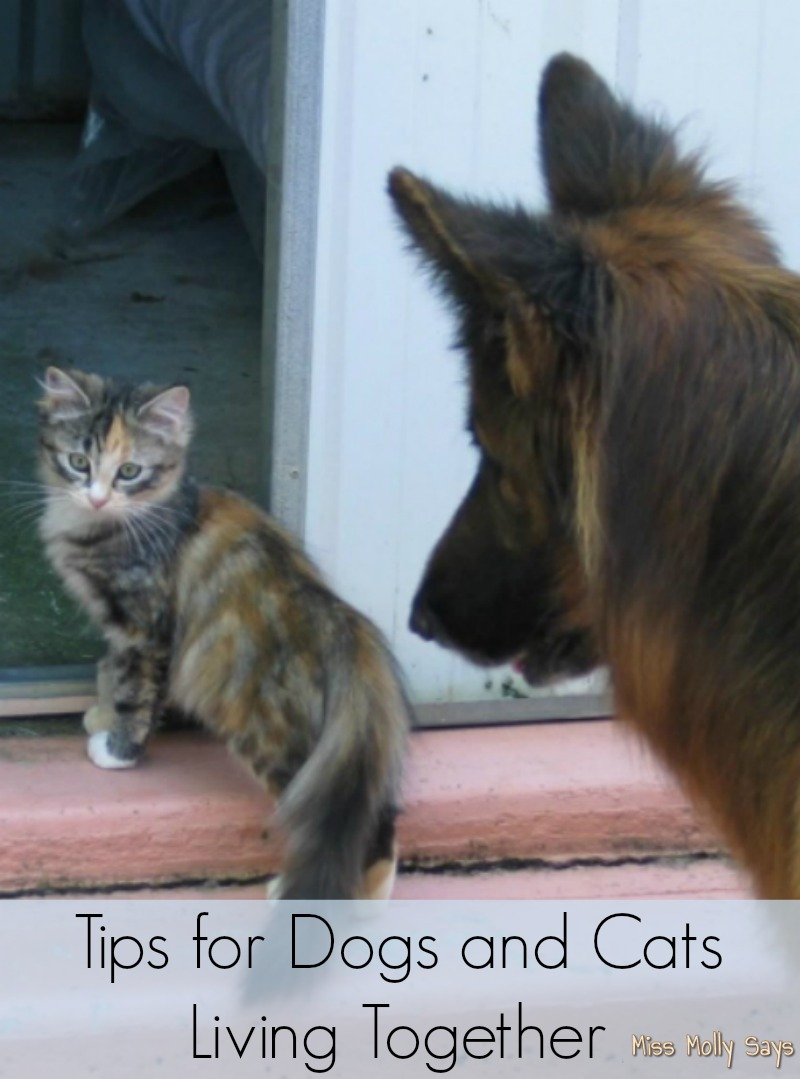 Tips for Dogs and Cats Living Together