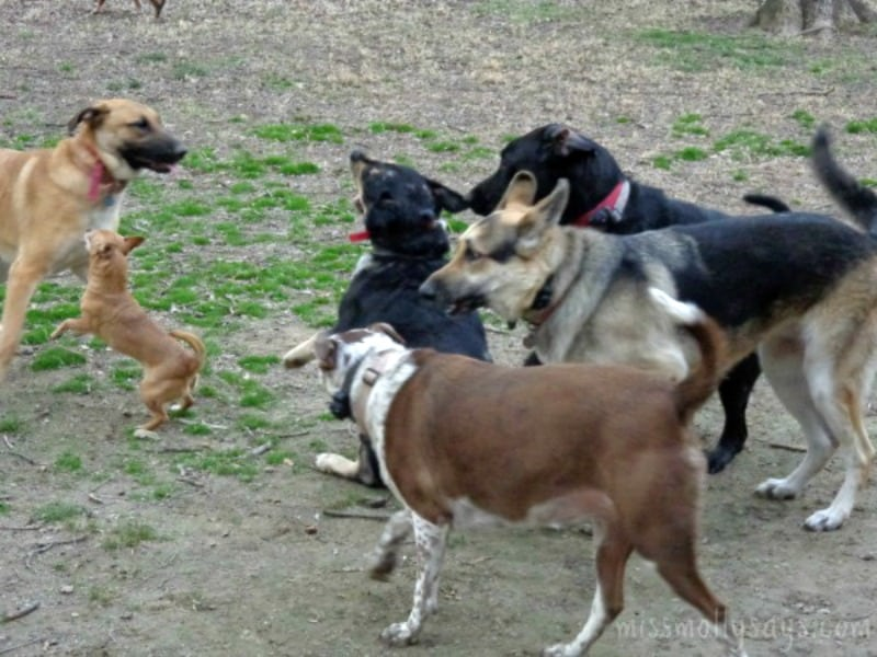 Strategies for Handling Dog Jealousy in the Pack