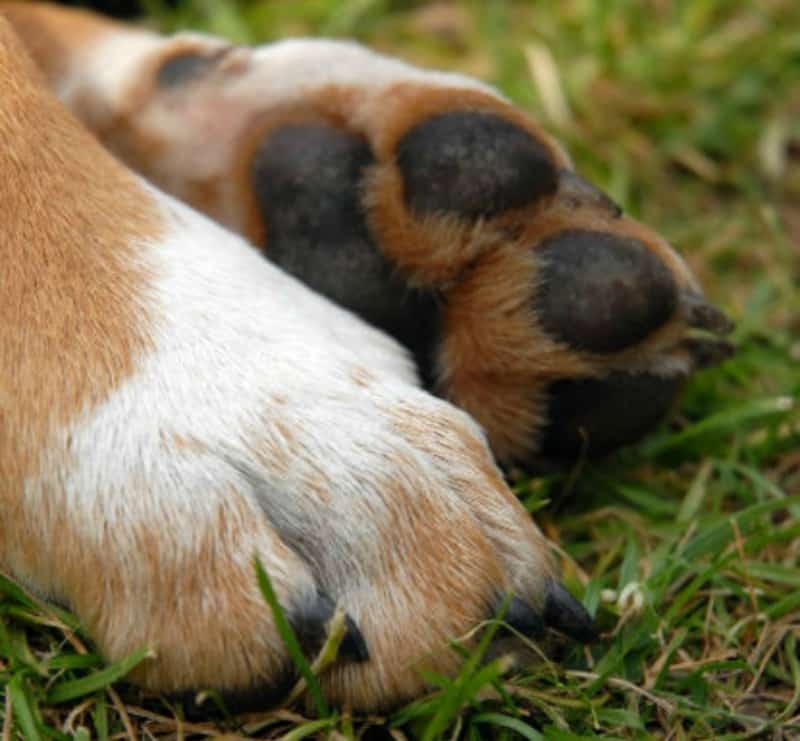 Winter Paw Care for Dogs