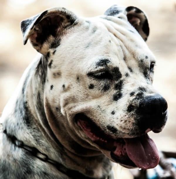 "Holistic Treatment for Pets – Learning ""Howl-istic"" Basics!"