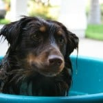 A Day at the Spa - Bathing Your Dog