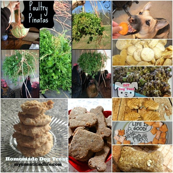Healthy-Homemade-Pet-Treats