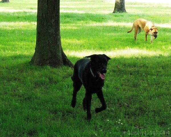 Purina-Dog-Chow-Light-&-Healthy-logo-#lightandhealthy