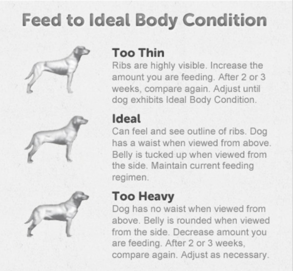 Purina-Dog-Chow-Light-and-Healthy-#lightandhealthy