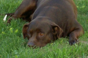 Lost Dogs: Don't keep what ain't yers…