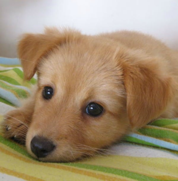 Kids-and-dogs-When-should-ya-get-'em-one?