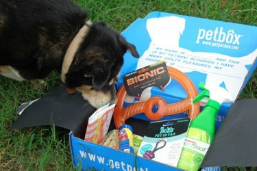 July's-PetBox-Brought-Us-Fun-and-Yummy-Goodies