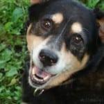 Soma-Pet, Sallie-smiling