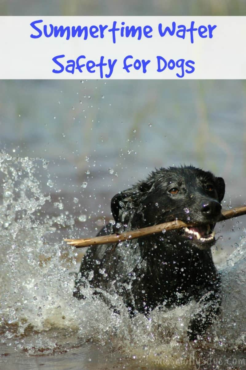 Summertime Water Safety Tips for Dogs