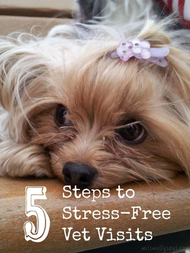 5-Steps-to-Stress-Free-Vet-Visits
