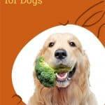 Garden Vegetables Safe for Dogs