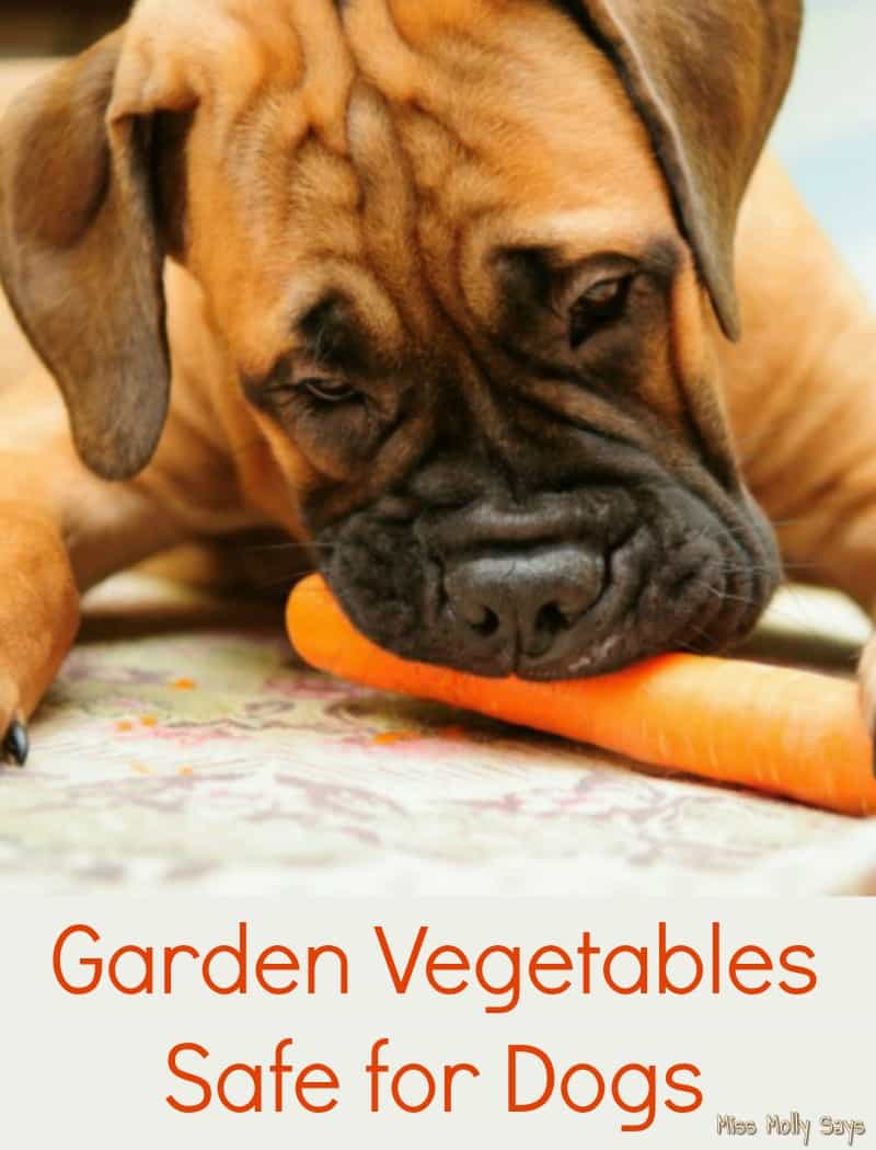 Garden Vegetables Safe for Dogs