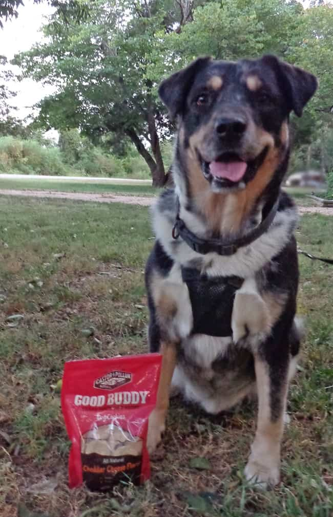 Good-Buddy-Cheddar-Cheese-Flavor-Dog-Treats