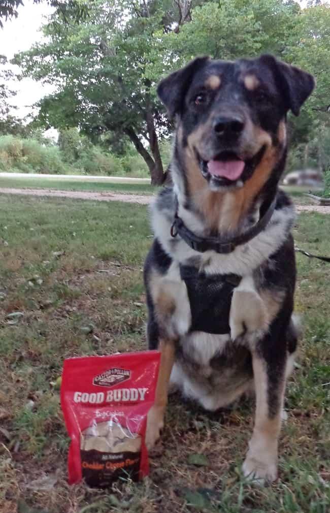 Good-Buddy-Cheddar-Cheese-Flavor-Dog-Treats-Seager