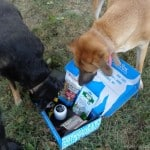August-PetBox
