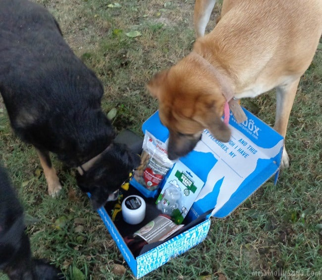 August PetBox brought us a Portable Water Bowl, Dog Treats, Toys & More!