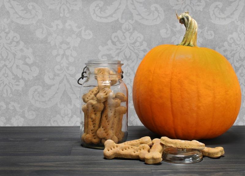 Pumpkin and pumpkin dog treats