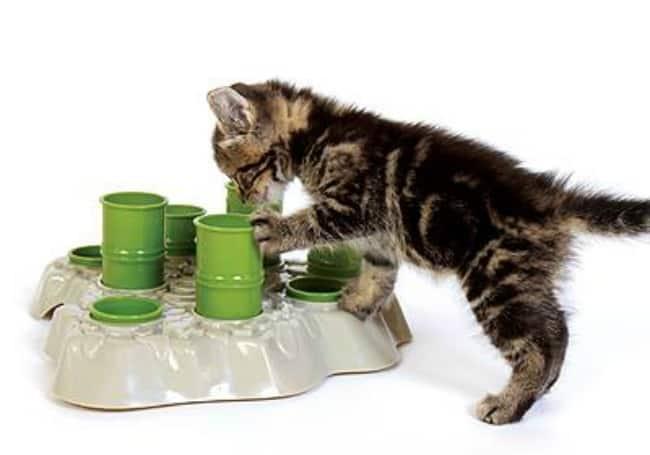 Aikiou-Stimulo-Cat-Activity-Center-kitten